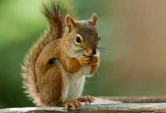 Florida Real Estate News - Florida man fights to keep emotional support squirrel