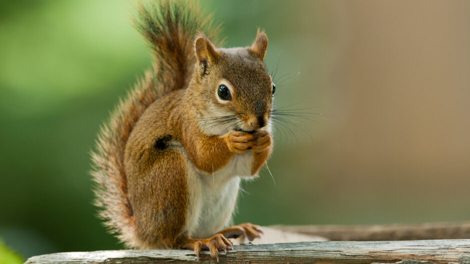 Florida Real Estate News – Florida man fights to keep emotional support squirrel